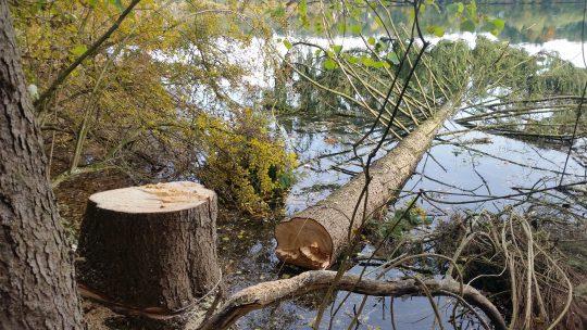 Totholz im Lech